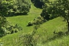 colline_di_montedale